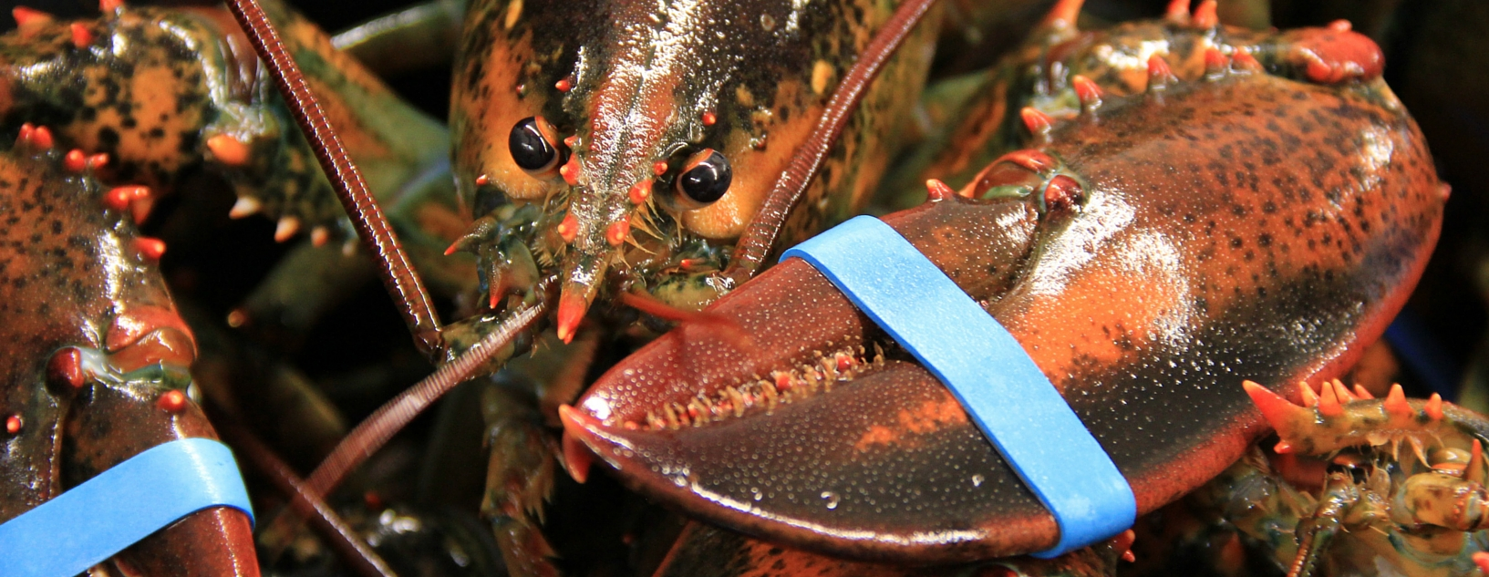 Shipping lobster all over the world
