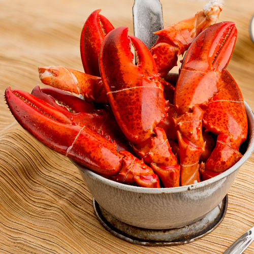 2016 Date announced for Lobster Academy